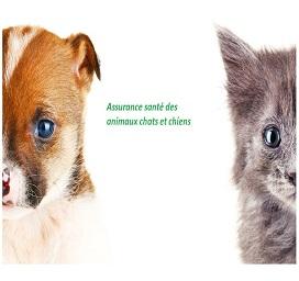 Assurance santé des animaux chats et chiens